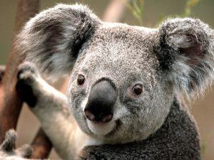 This is test album KoalaLighthousePenguinsTulips
